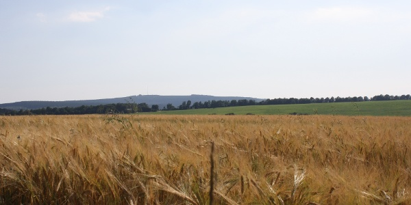 Felderlandschaft im Husnrück