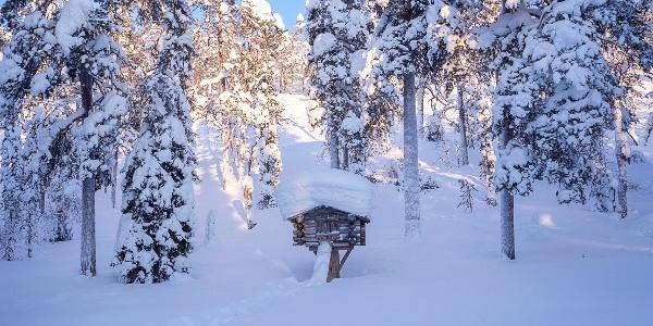 Rykimäkero Nili-Hütte.