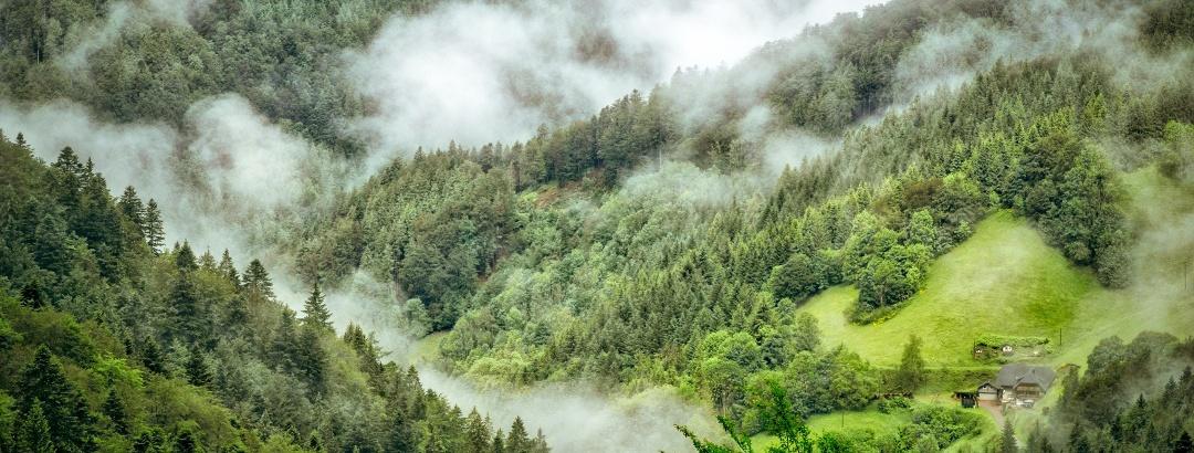 Fog over the Black Forest