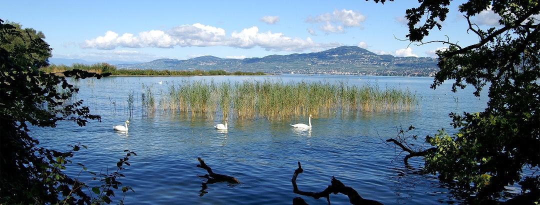 Naturschutzgebiet Les Grangettes.