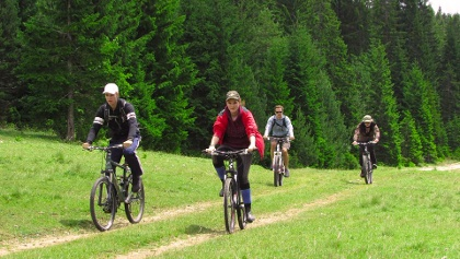 Cycling through forest
