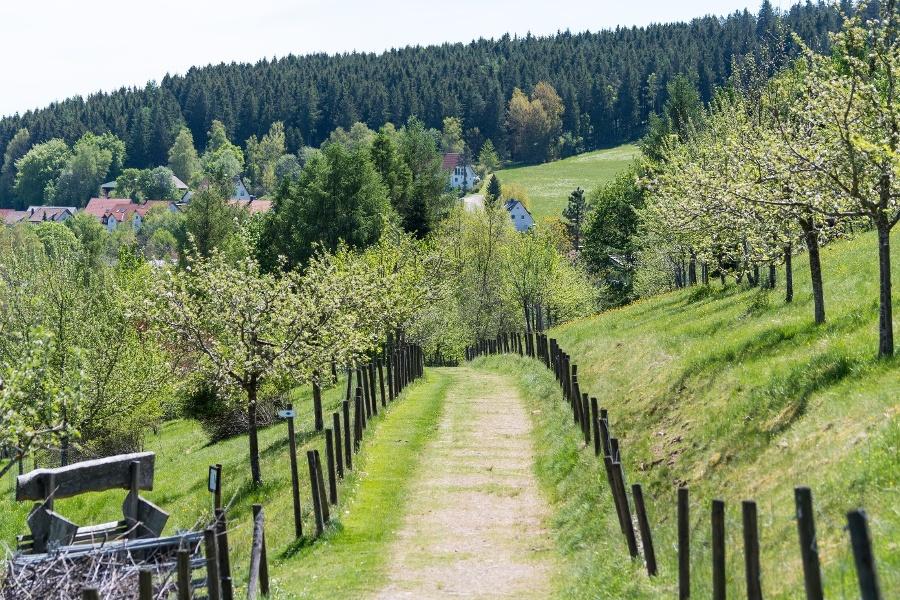 Nordic Walking Runde Streuobstwiese