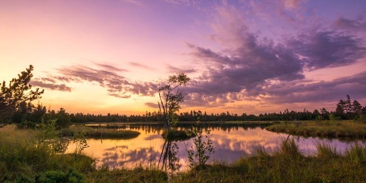 Sonnenaufgang im Wildsee Hochmoor am Kaltenbronn