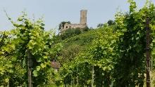 Weinheim: Rennrad-Tour - Zum Neckar und in den Überwald