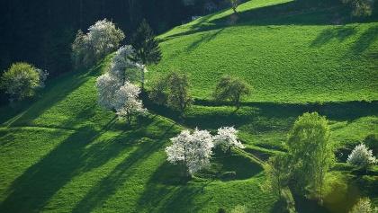 Koroška grass covered hills