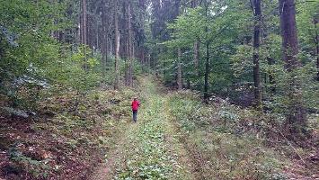 Foto Aufstieg auf den Kaiserberg