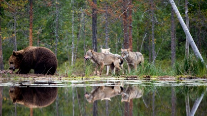 Real wilderness in Kuhmo Finland, Wild Taiga, Arctic Lakeland