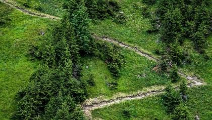 Grindelwald Trail 31