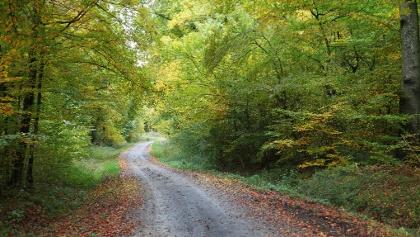 Forêt de Woelfling