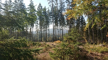 Foto Waldblick über Lichtung