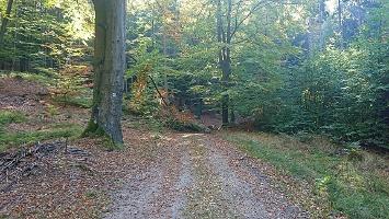 Foto Waldweg zur Balzhütte