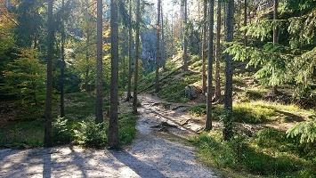 Foto Waldweg zur Felsenburg Schauenstein