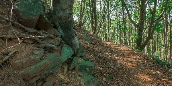 A Köves-orom oldalában árnyas ösvény vezet