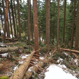 Viel Arbeit für die Wegewarte im Frühjahr: im Wald liegen noch viele Bäume aus der Föhnsturmperiode im Herbst herum