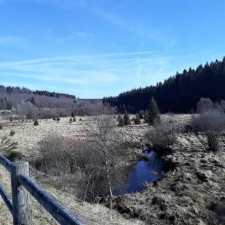 De rivier de Roer: hier bloeien eind april narcissen tussen het wollegras. Zou één van de koudste plekken in België zijn