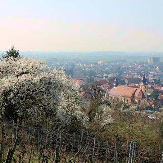 Blick auf Hemsbach