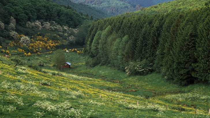 Landschaft im Naturpark Our