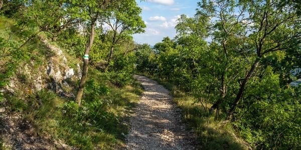 Kavicsos ösvény a Grófi úton