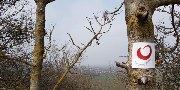 Aussichtspunkt Nenzenheim