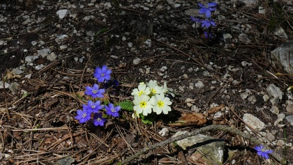 Frühling am Krennweg