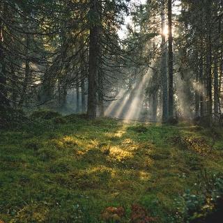Morgenstimmung auf dem Finnskogsleden
