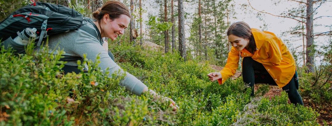 Berry picking in the Jyväskylä region