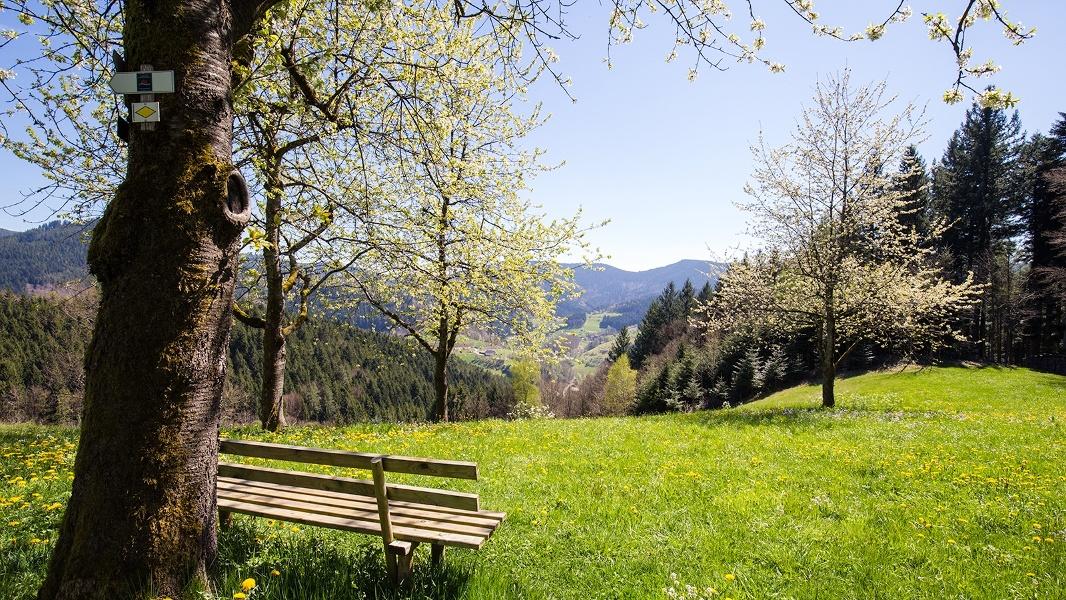 """Schwarzwälder Wandersinfonie:  Der  Schwarzwaldsteig  in Bad Peterstal-Griesbach - eine Tour  für """"Weitblicker"""""""