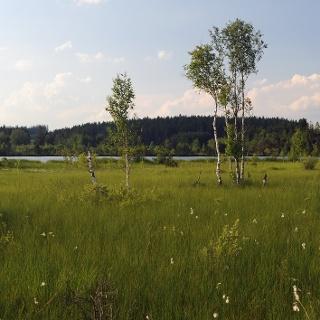 Moorwiese mit Ursee, Taufach-Fetzach-Moos