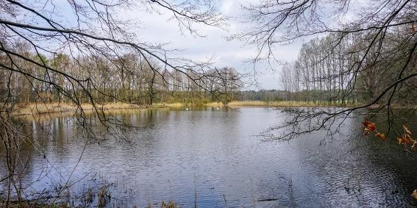 Waldteich bei Rietschen