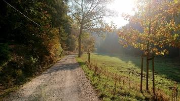 Foto Forstweg zum Khaatal