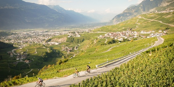 Cyclists in the Valais vineyard