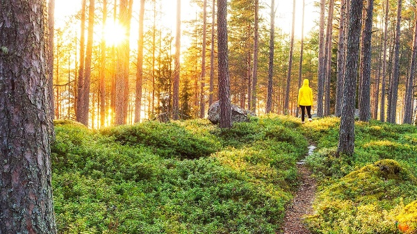 Hiking in a finnish forest