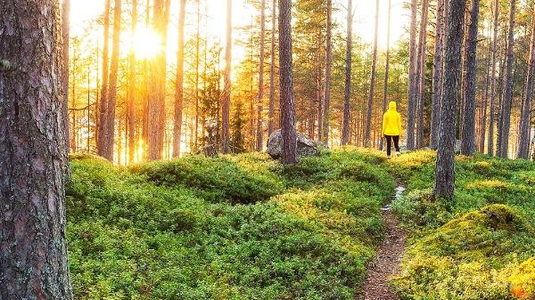 Wanderer im finnischen Wald
