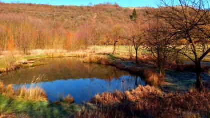 Kleiner Teich im Feuchtbiotop Talaue
