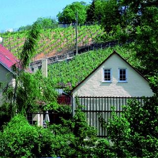 """Ferienhaus"""" In den Weinbergen"""""""