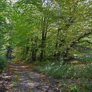 Waldweg