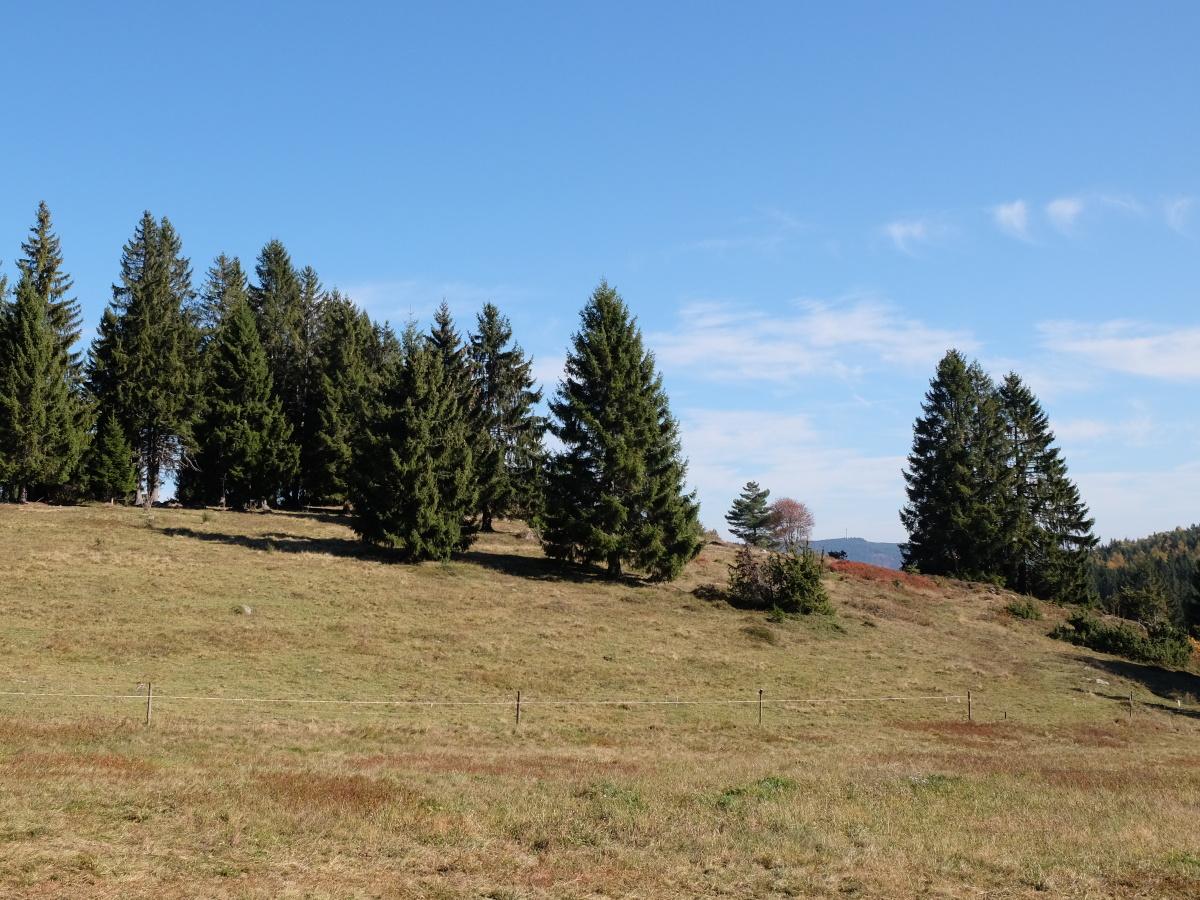 Naturschutzgebiet Rüttewies-Scheibenrain