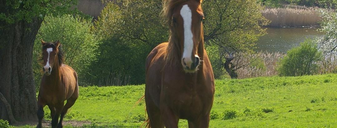 Pferde beim Martinsweiher