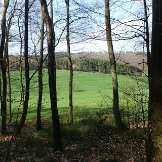 Blick auf die Wiese mit Borkebach
