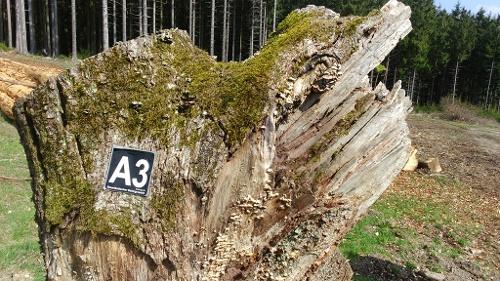 Rund um den Reckenberg in Neuenrade-Affeln - A3 -
