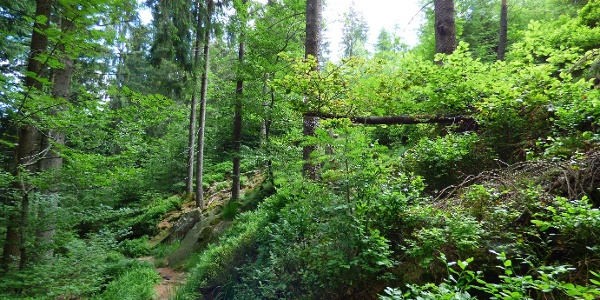 Wanderweg vom Buhlbachsee zur Schwarzwaldhochstraße