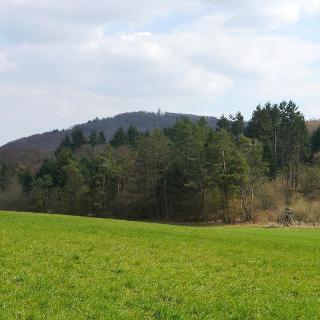 Blick zum Turm auf den Rimberg.