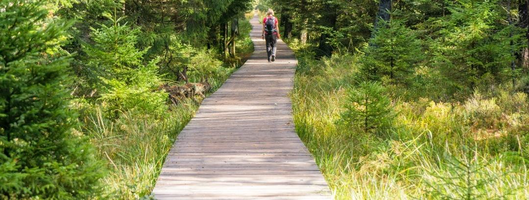 Ein wunderschöner Holzbohlenweg führt durch das Hochmoor