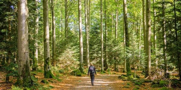 Auf ebenen Wegen durch den Wald geht es Richtung Sommerberg