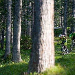 Der eindrückliche Lärchenwald bei Lantsch / Lenz