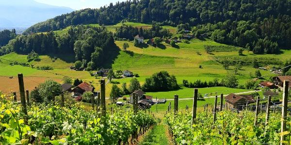Rheintaler Höhenweg.
