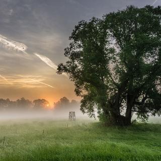 Morgentau auf den Spreewaldwiesen