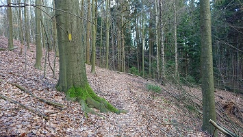 Foto Forststeig Richtung Kleinhennersdorfer Stein