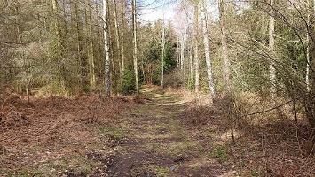 Foto Weg zum Rotstein