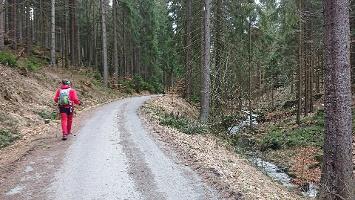 Foto Forststraße am Cunnersdorfer Bach